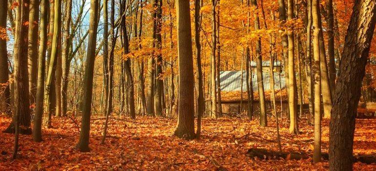 Woods near Grand Rapids, Michigan